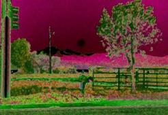 35mm Dusky Pink