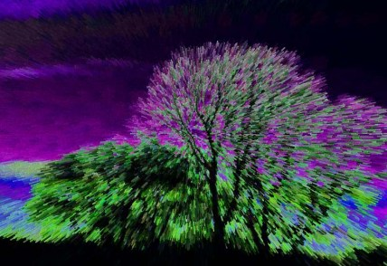 35mm electric trees