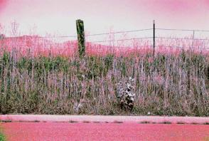 35mm hot pink road