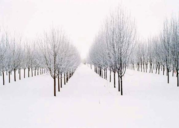 35mm the tree farm