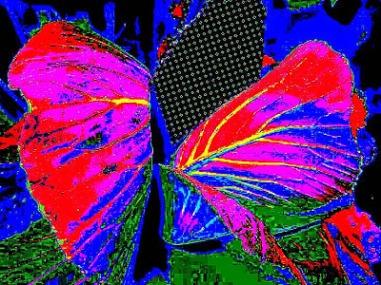 Digital my heart is reborn like a butterfly