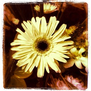 Instagram a flower blossoms for its own joy