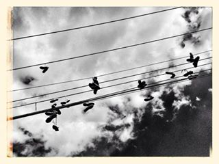 iphone bw shoes