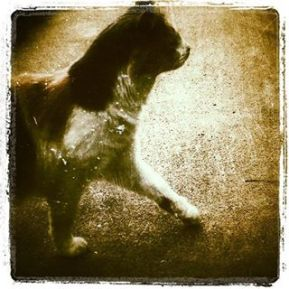 strut.