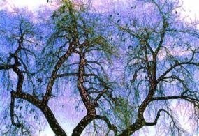 the vanilla bean tree