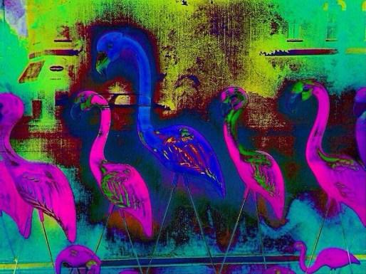 i - flamingo crossing