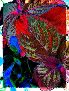 i - leaves