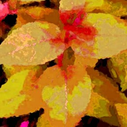 i - summer leaves