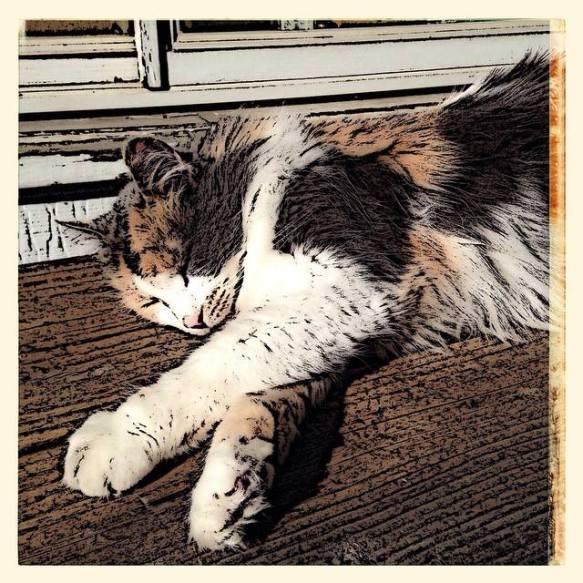 ig - cat nap