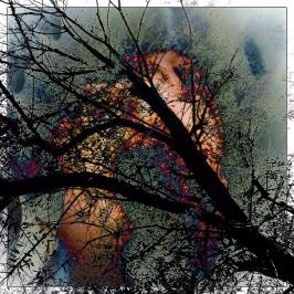 tree - i - 1543