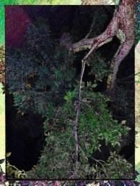 tree - i - 3 (32)