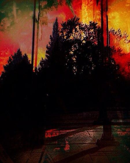 tree - i - enjoy the silence