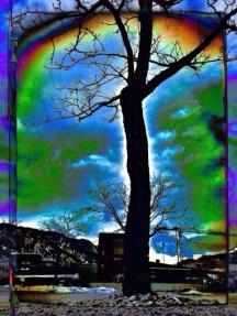 tree - i - night