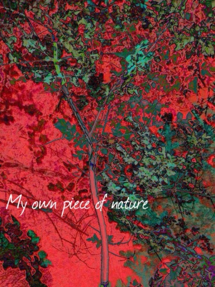 w - i - my own piece of nature