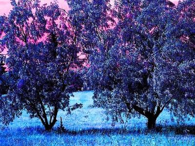 2 blue trees