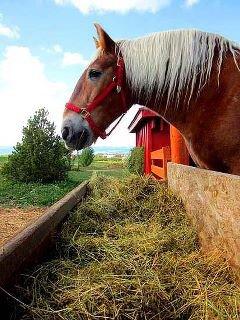 dn - horse
