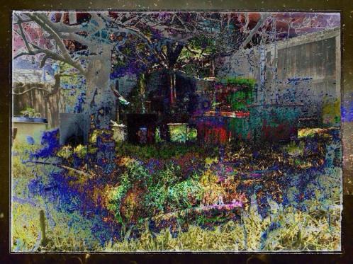 i - bwc - colorado vegetable and herb garden including catnip